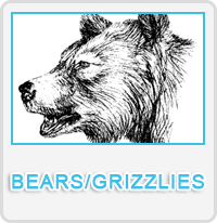 Bears Grizzlies Designs