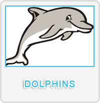 Dolphins Designs